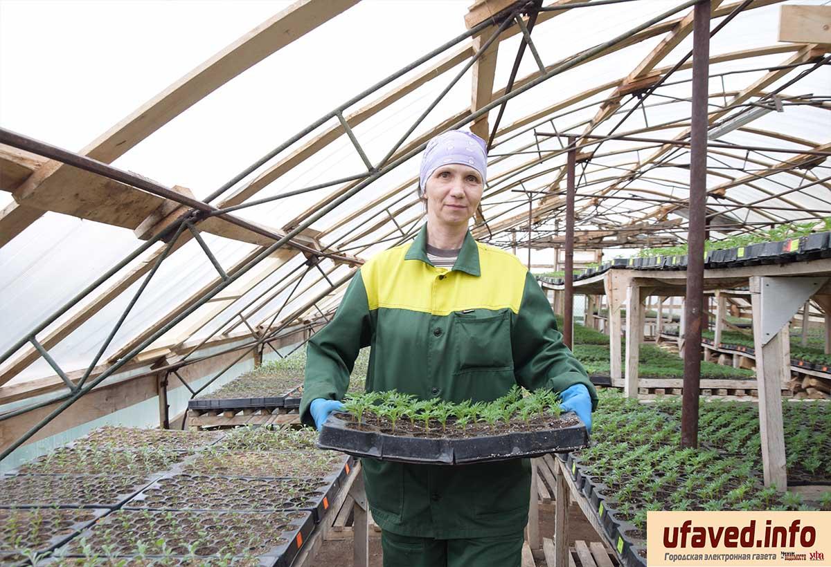 Уфу украсят 2 млн 240 тысяч цветов «Горзеленхоза»